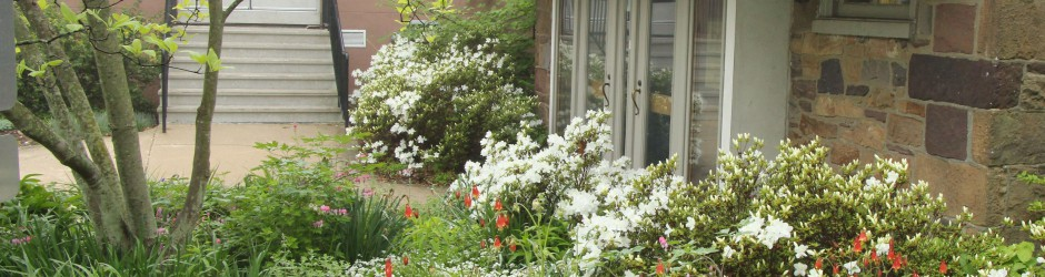 Naturalized native columbine, sweet woodruff, and white azaleas, mid-May 2014.